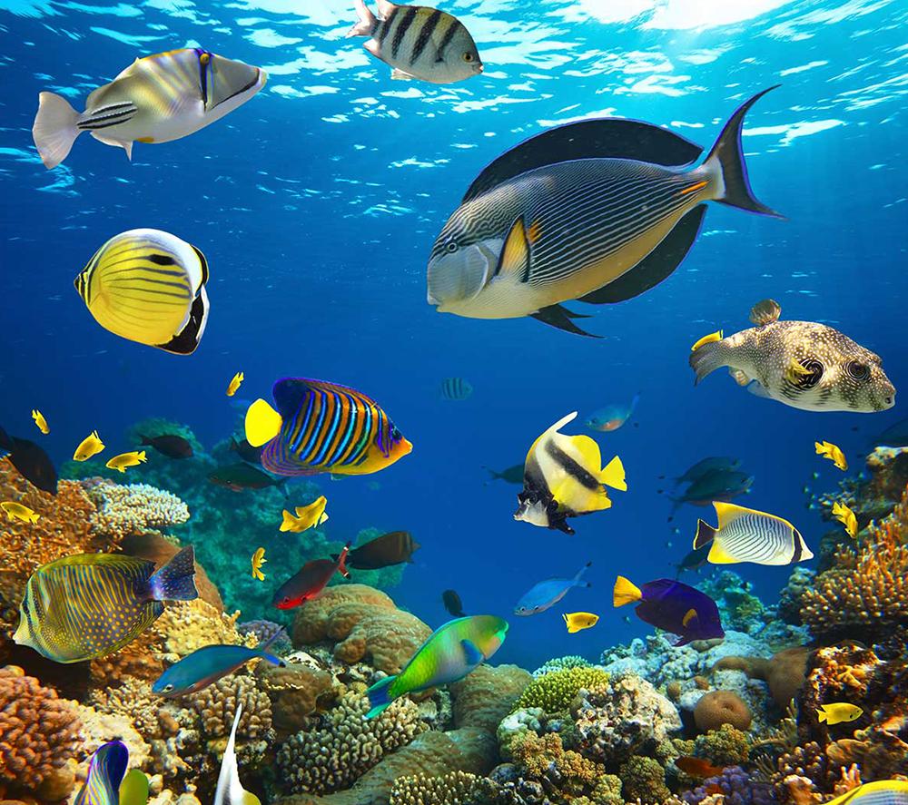 Peixe na imagem do oceano