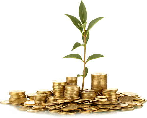 Small plant surrounded by gold coins