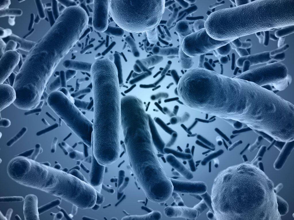 bactéries mangeuses de plastique