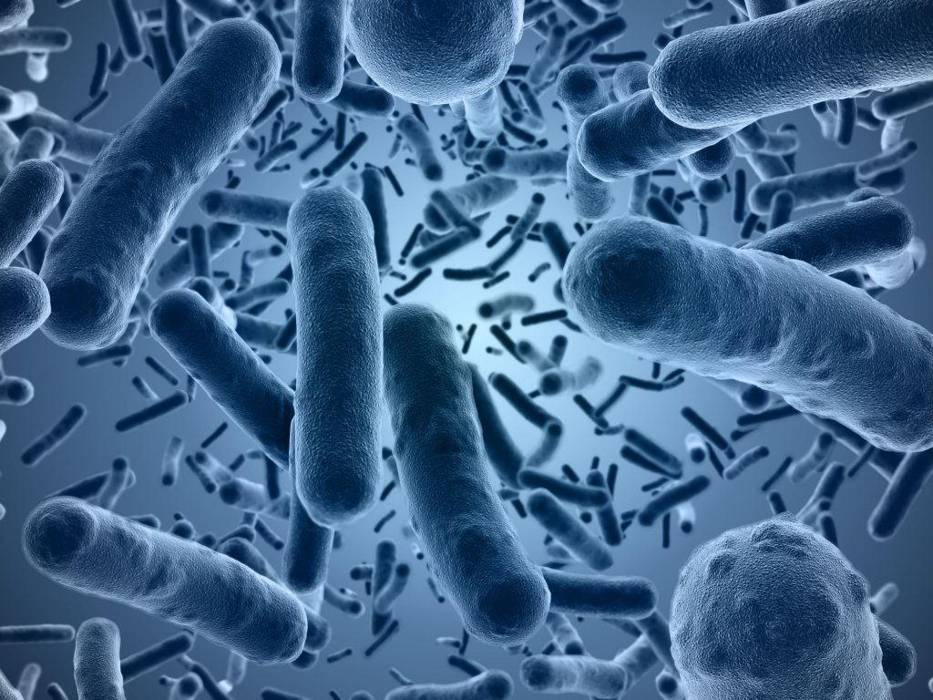 plastic-eating-bacteria