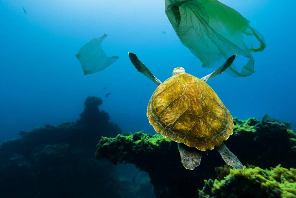 faits sur la pollution des océans