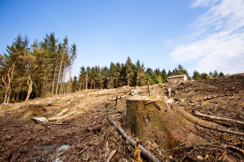 problèmes-environnementaux-déforestation