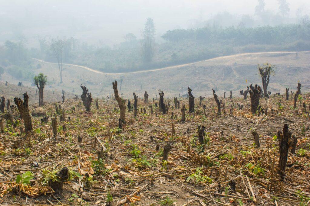 amazon deforestation april